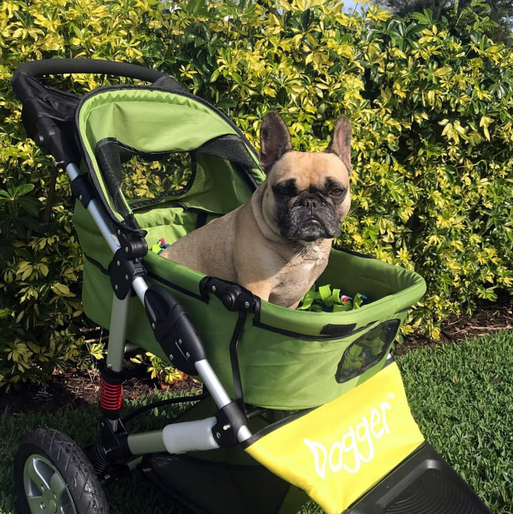 Dog in a stroller during crate rest