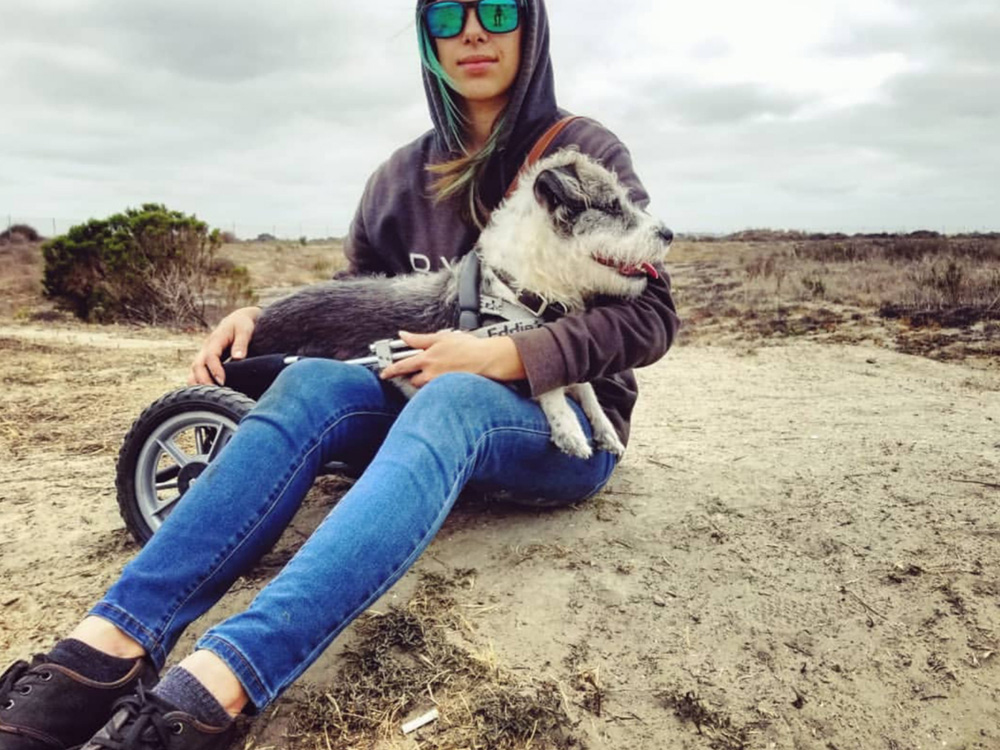 Paralyzed dog in a wheelchair sitting in owners lap